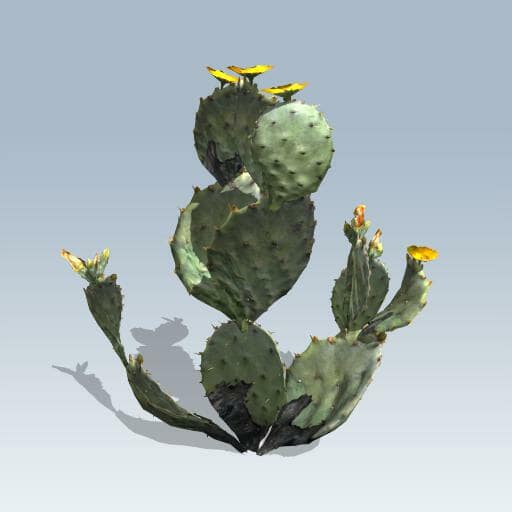 Prickly Pear Cactus V7 Speedtree