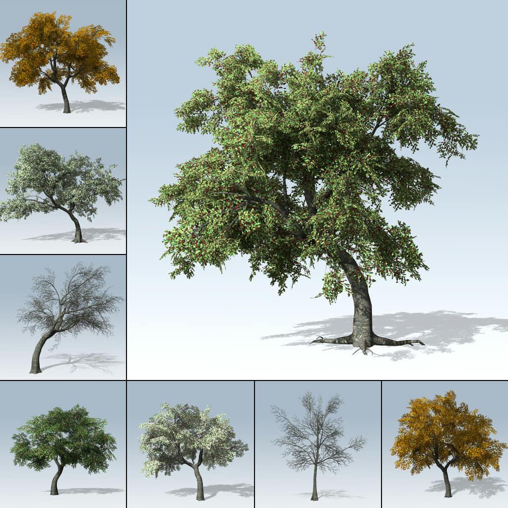 Cherry Tree (Games v7)
