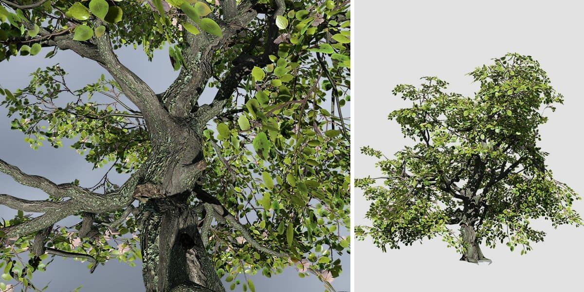 Apple: Hero Forest